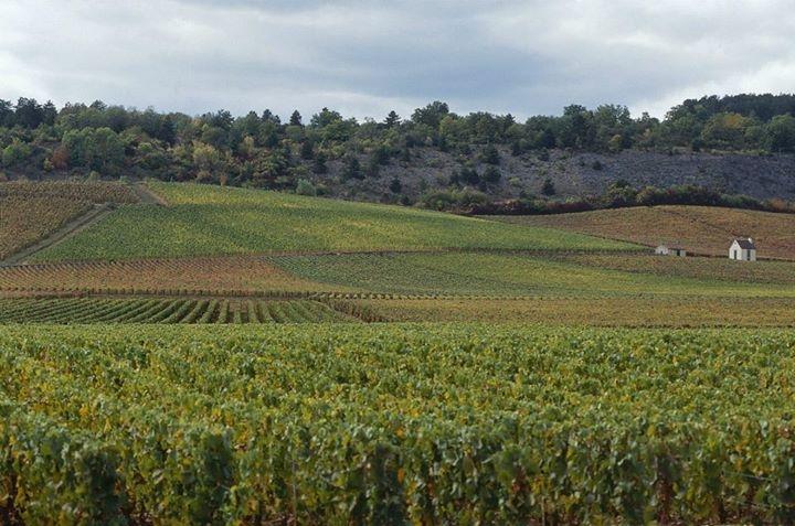 799e679313 Le Bourgogne Chanson Pinot Noir 2012